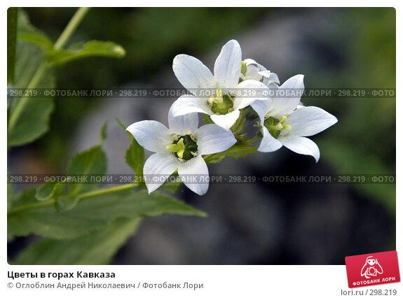 Цветы в горах Кавказа, фото № 298219, снято 23 июня 2017 г. (c) Оглоблин Андрей Николаевич / Фотобанк Лори