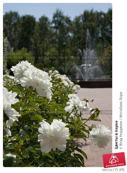 Цветы в парке, фото № 71375, снято 12 июня 2007 г. (c) Влад Нордвинг / Фотобанк Лори