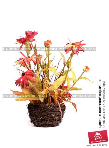 Цветы в плетеной корзинке, фото № 252839, снято 27 февраля 2008 г. (c) Vdovina Elena / Фотобанк Лори