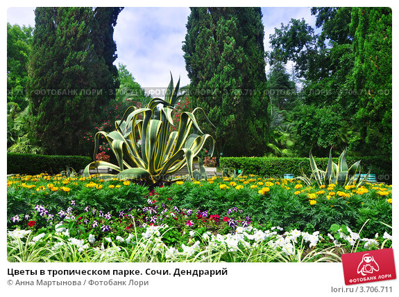 Купить «Цветы в тропическом парке. Сочи. Дендрарий», фото № 3706711, снято 8 июля 2012 г. (c) Анна Мартынова / Фотобанк Лори