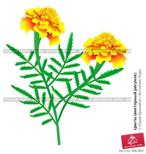 Купить «Цветы (векторный рисунок)», иллюстрация № 306903 (c) Юрий Брыкайло / Фотобанк Лори
