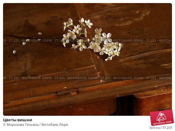 Цветы вишни, фото № 77231, снято 15 мая 2005 г. (c) Морозова Татьяна / Фотобанк Лори