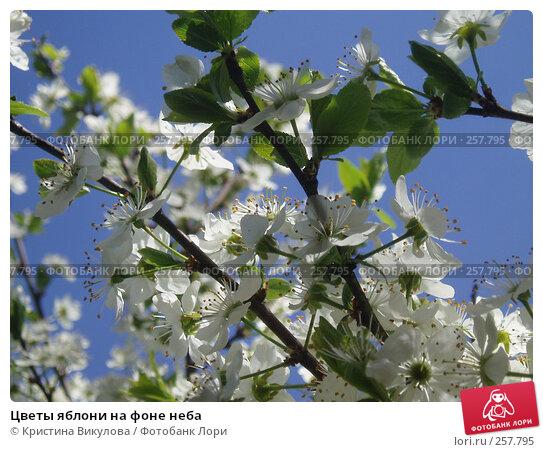 Цветы яблони на фоне неба, фото № 257795, снято 15 мая 2007 г. (c) Кристина Викулова / Фотобанк Лори