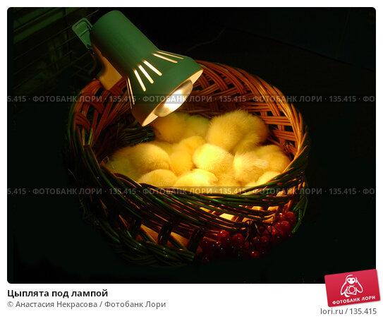 Цыплята под лампой, фото № 135415, снято 7 октября 2005 г. (c) Анастасия Некрасова / Фотобанк Лори