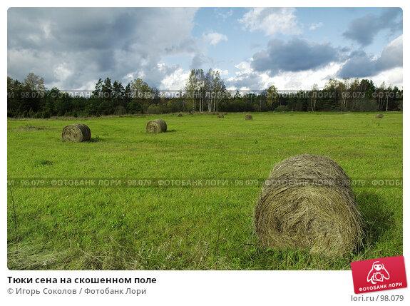 Тюки сена на скошенном поле, фото № 98079, снято 24 октября 2016 г. (c) Игорь Соколов / Фотобанк Лори