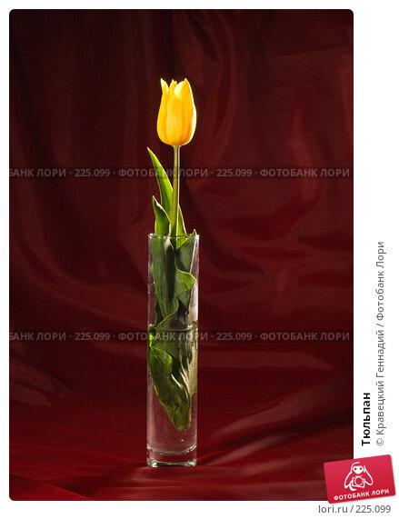 Тюльпан, фото № 225099, снято 10 мая 2005 г. (c) Кравецкий Геннадий / Фотобанк Лори