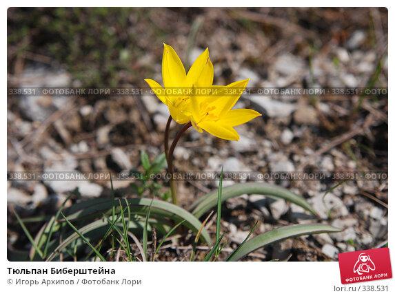 Купить «Тюльпан Биберштейна», фото № 338531, снято 21 апреля 2007 г. (c) Игорь Архипов / Фотобанк Лори