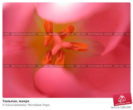Тюльпан, макро, фото № 209535, снято 18 января 2017 г. (c) Ольга Шилина / Фотобанк Лори