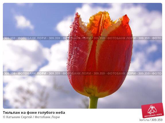 Купить «Тюльпан на фоне голубого неба», фото № 309359, снято 31 мая 2008 г. (c) Катыкин Сергей / Фотобанк Лори