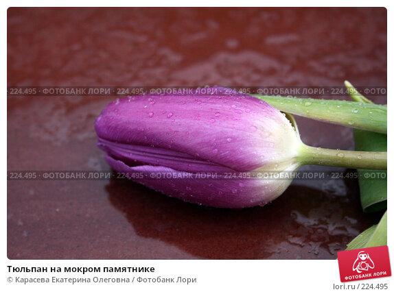 Тюльпан на мокром памятнике, фото № 224495, снято 23 февраля 2008 г. (c) Карасева Екатерина Олеговна / Фотобанк Лори