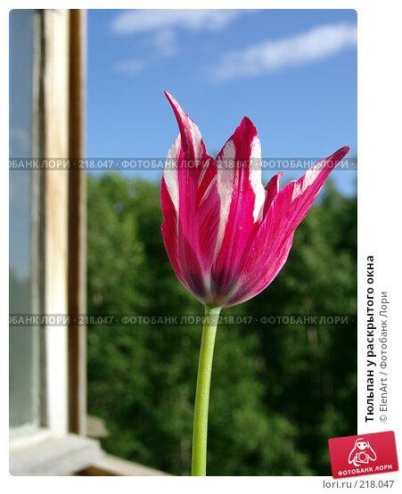 Тюльпан у раскрытого окна, фото № 218047, снято 27 июля 2017 г. (c) ElenArt / Фотобанк Лори