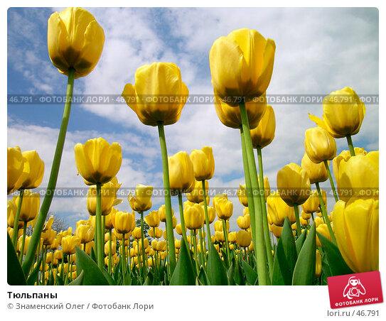 Тюльпаны, эксклюзивное фото № 46791, снято 16 мая 2004 г. (c) Знаменский Олег / Фотобанк Лори