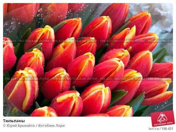 Тюльпаны, фото № 198431, снято 3 февраля 2008 г. (c) Юрий Брыкайло / Фотобанк Лори