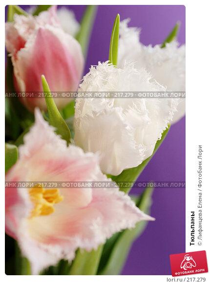 Тюльпаны, фото № 217279, снято 5 марта 2008 г. (c) Лифанцева Елена / Фотобанк Лори