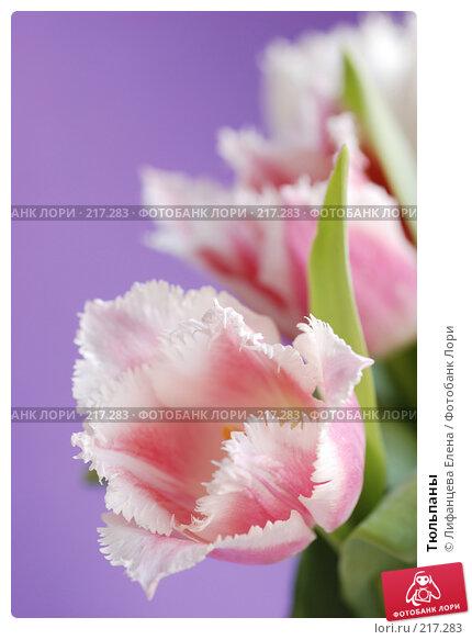 Тюльпаны, фото № 217283, снято 5 марта 2008 г. (c) Лифанцева Елена / Фотобанк Лори