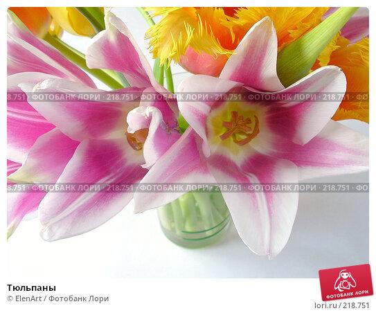 Тюльпаны, фото № 218751, снято 22 июля 2017 г. (c) ElenArt / Фотобанк Лори