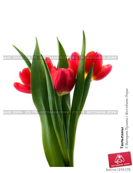 Купить «Тюльпаны», фото № 219179, снято 1 марта 2008 г. (c) Валерия Потапова / Фотобанк Лори