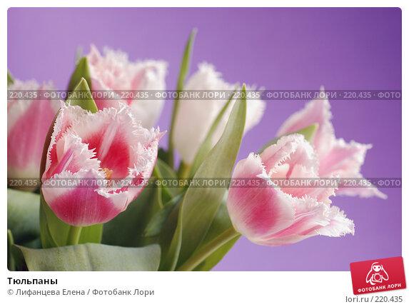 Тюльпаны, фото № 220435, снято 5 марта 2008 г. (c) Лифанцева Елена / Фотобанк Лори