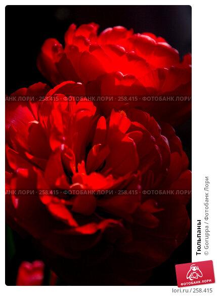 Купить «Тюльпаны», фото № 258415, снято 1 января 2004 г. (c) Goruppa / Фотобанк Лори