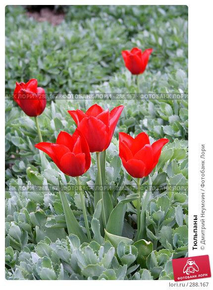 Тюльпаны, эксклюзивное фото № 288167, снято 22 апреля 2008 г. (c) Дмитрий Неумоин / Фотобанк Лори
