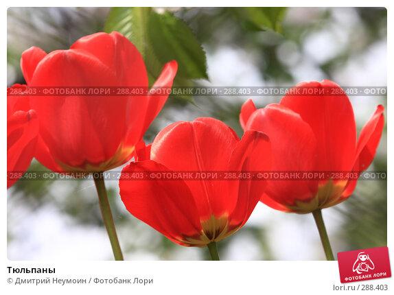 Купить «Тюльпаны», эксклюзивное фото № 288403, снято 21 апреля 2008 г. (c) Дмитрий Неумоин / Фотобанк Лори