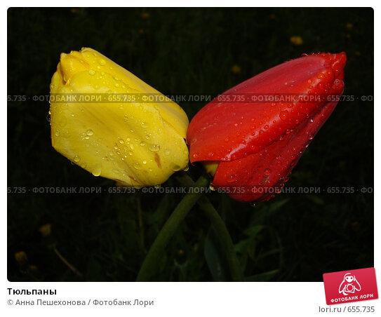 Тюльпаны. Стоковое фото, фотограф Анна Пешехонова / Фотобанк Лори