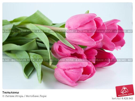 Купить «Тюльпаны», фото № 4428943, снято 8 марта 2013 г. (c) Литвяк Игорь / Фотобанк Лори