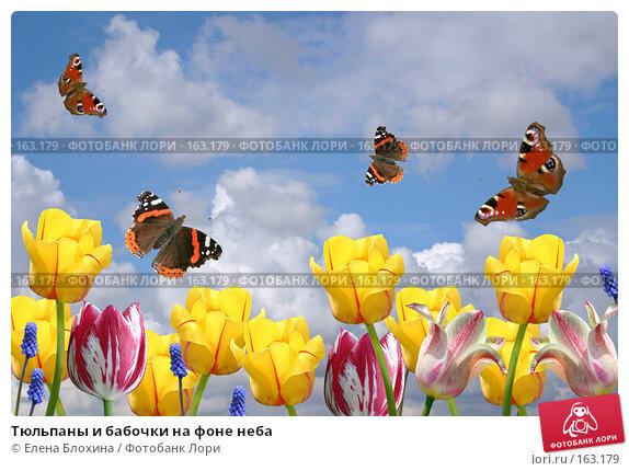 Тюльпаны и бабочки на фоне неба, фото № 163179, снято 24 апреля 2007 г. (c) Елена Блохина / Фотобанк Лори