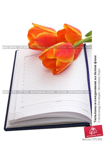 Тюльпаны и ежедневник на белом фоне, фото № 171519, снято 25 апреля 2007 г. (c) Александр Катайцев / Фотобанк Лори