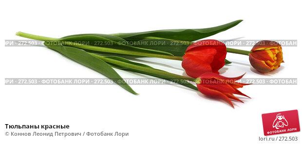 Тюльпаны красные, фото № 272503, снято 3 мая 2008 г. (c) Коннов Леонид Петрович / Фотобанк Лори