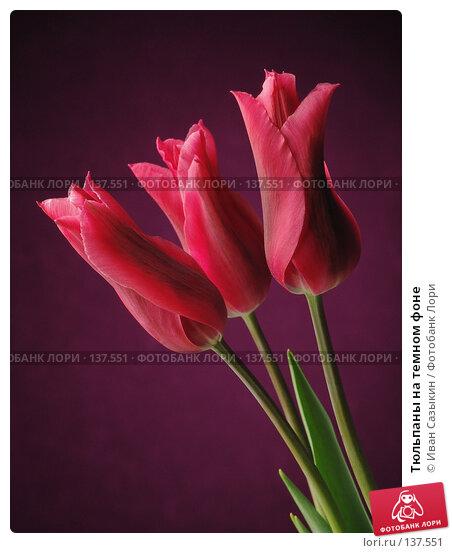 Тюльпаны на темном фоне, фото № 137551, снято 20 апреля 2004 г. (c) Иван Сазыкин / Фотобанк Лори