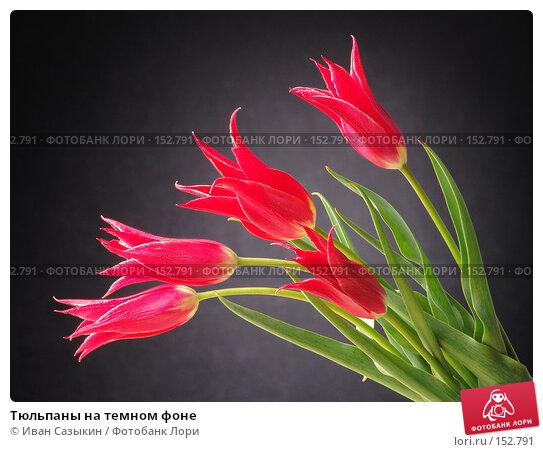 Купить «Тюльпаны на темном фоне», фото № 152791, снято 20 апреля 2004 г. (c) Иван Сазыкин / Фотобанк Лори