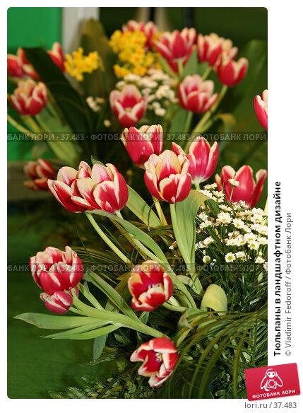 Тюльпаны в ландшафтном дизайне, фото № 37483, снято 26 апреля 2007 г. (c) Vladimir Fedoroff / Фотобанк Лори