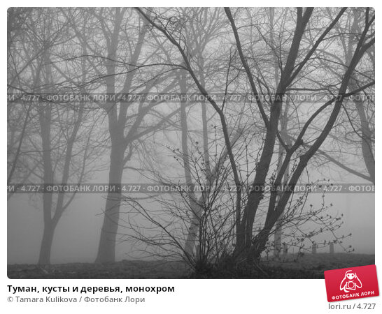 Туман, кусты и деревья, монохром, фото № 4727, снято 19 марта 2005 г. (c) Tamara Kulikova / Фотобанк Лори