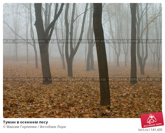 Туман в осеннем лесу, фото № 141435, снято 20 февраля 2017 г. (c) Максим Горпенюк / Фотобанк Лори