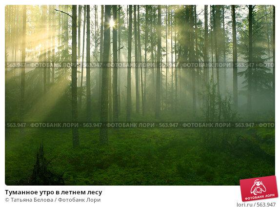 Купить «Туманное утро в летнем лесу», фото № 563947, снято 4 сентября 2007 г. (c) Татьяна Белова / Фотобанк Лори