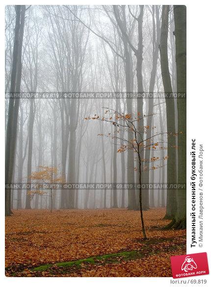 Купить «Туманный осенний буковый лес», фото № 69819, снято 30 ноября 2006 г. (c) Михаил Лавренов / Фотобанк Лори
