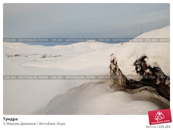 Тундра, фото № 229283, снято 3 ноября 2007 г. (c) Максим Деминов / Фотобанк Лори
