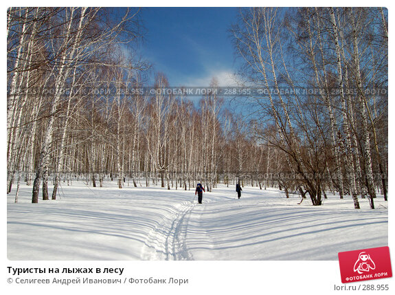 Туристы на лыжах в лесу, фото № 288955, снято 22 марта 2008 г. (c) Селигеев Андрей Иванович / Фотобанк Лори