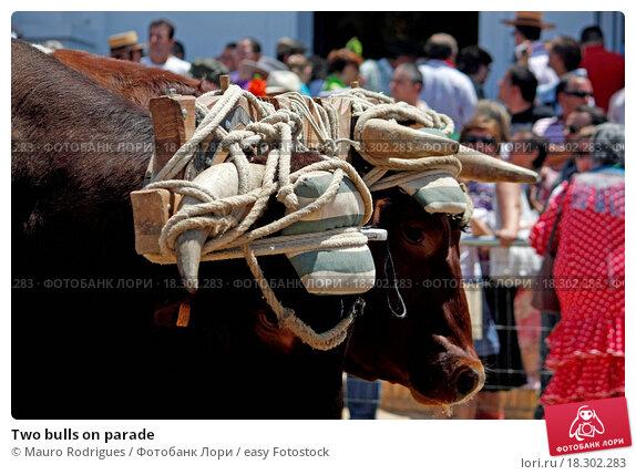 bulls on parade essay