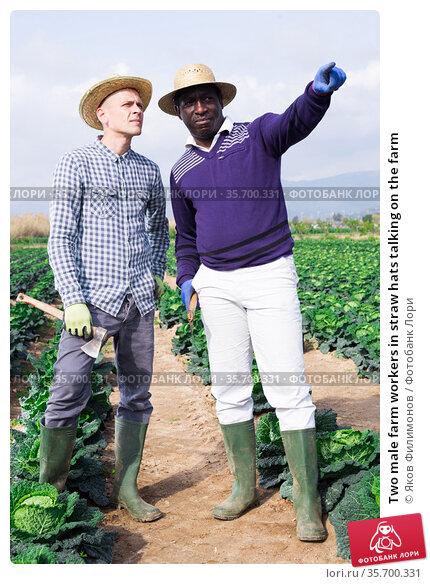 Two male farm workers in straw hats talking on the farm. Стоковое фото, фотограф Яков Филимонов / Фотобанк Лори