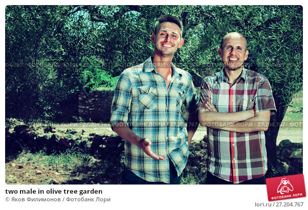 Купить «two male in olive tree garden», фото № 27204767, снято 20 ноября 2017 г. (c) Яков Филимонов / Фотобанк Лори