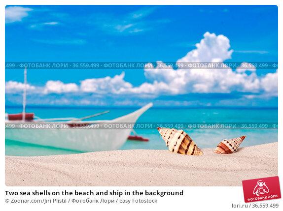 Two sea shells on the beach and ship in the background. Стоковое фото, фотограф Zoonar.com/Jiri Plistil / easy Fotostock / Фотобанк Лори