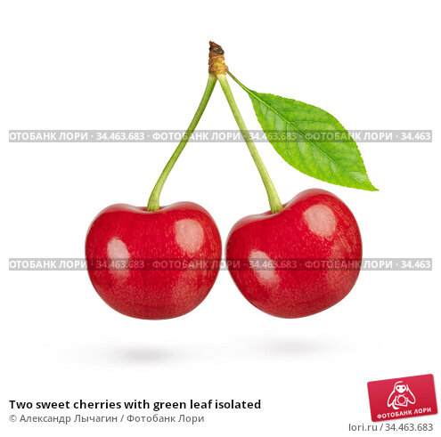 Two sweet cherries with green leaf isolated. Стоковое фото, фотограф Александр Лычагин / Фотобанк Лори