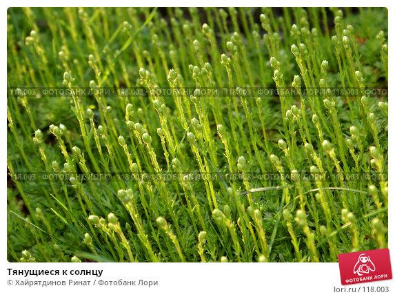 Купить «Тянущиеся к солнцу», фото № 118003, снято 21 мая 2007 г. (c) Хайрятдинов Ринат / Фотобанк Лори