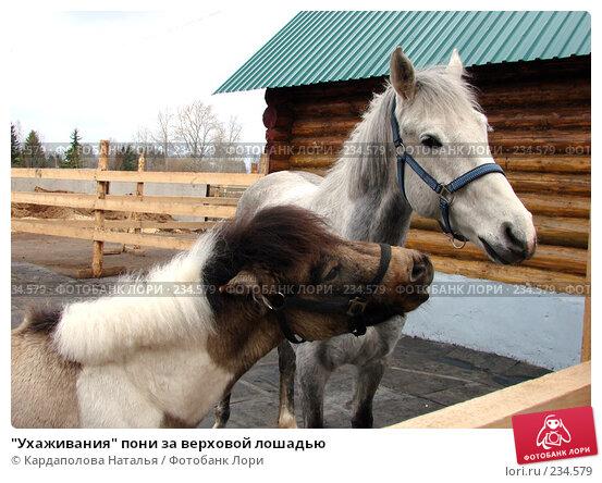 """""""Ухаживания"""" пони за верховой лошадью, фото № 234579, снято 27 апреля 2007 г. (c) Кардаполова Наталья / Фотобанк Лори"""