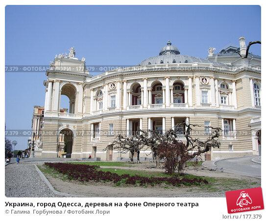 Украина, город Одесса, деревья на фоне Оперного театра, фото № 177379, снято 1 мая 2005 г. (c) Галина  Горбунова / Фотобанк Лори