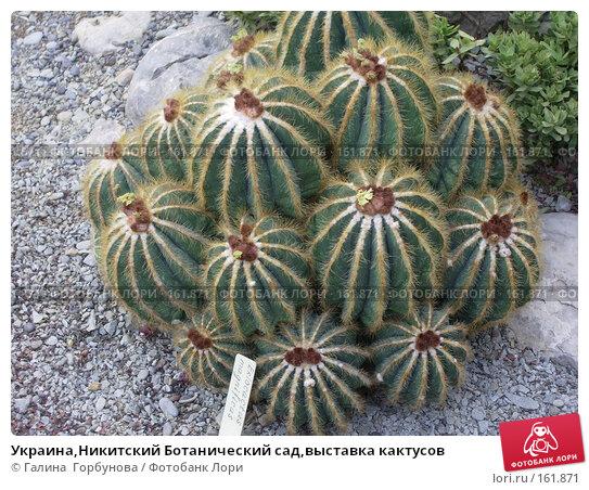 Украина,Никитский Ботанический сад,выставка кактусов, фото № 161871, снято 22 июня 2005 г. (c) Галина  Горбунова / Фотобанк Лори