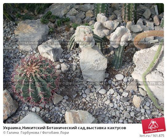 Купить «Украина,Никитский Ботанический сад,выставка кактусов», фото № 161875, снято 22 июня 2005 г. (c) Галина  Горбунова / Фотобанк Лори