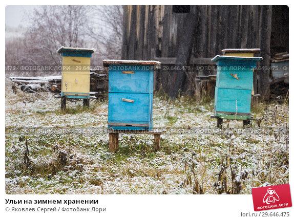 Купить «Ульи на зимнем хранении», фото № 29646475, снято 9 ноября 2018 г. (c) Яковлев Сергей / Фотобанк Лори